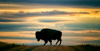 American Bison Icon