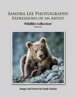 Sandra Lee Photography Expressions of an Artist book