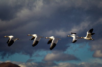 Five in Flight