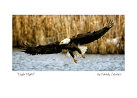 5X7 EAGLE FLIGHT