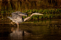 Heron on Madison_9926